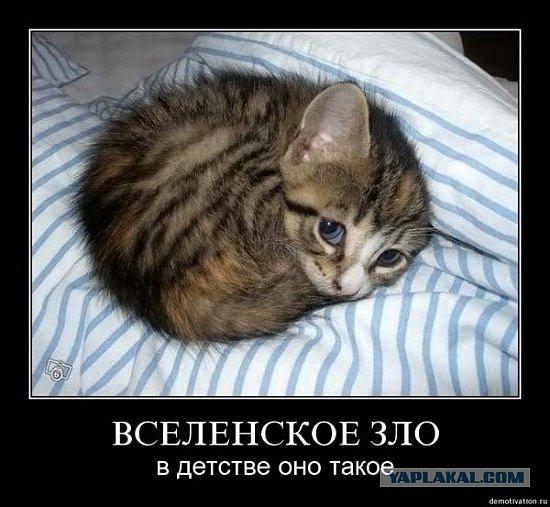http://udaff.com/image/12/77/127741.jpg