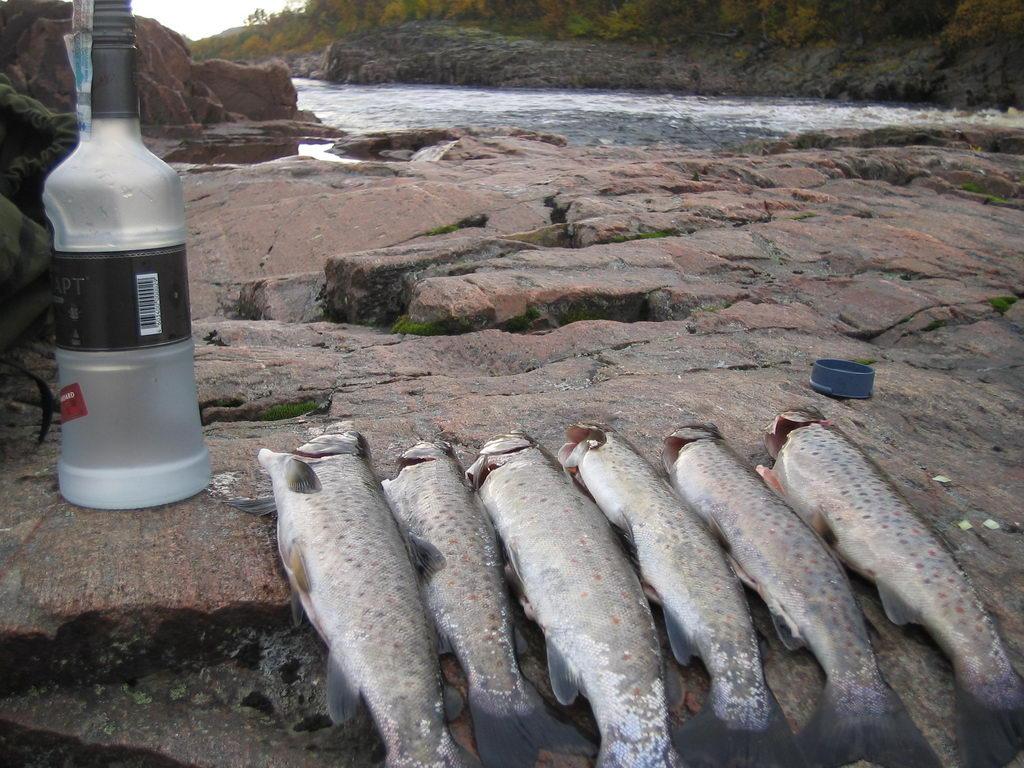 нижняя пулонга рыбалка