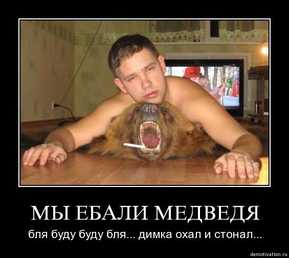 Демотиваторы приколы новые Еби медведя.. картинка.