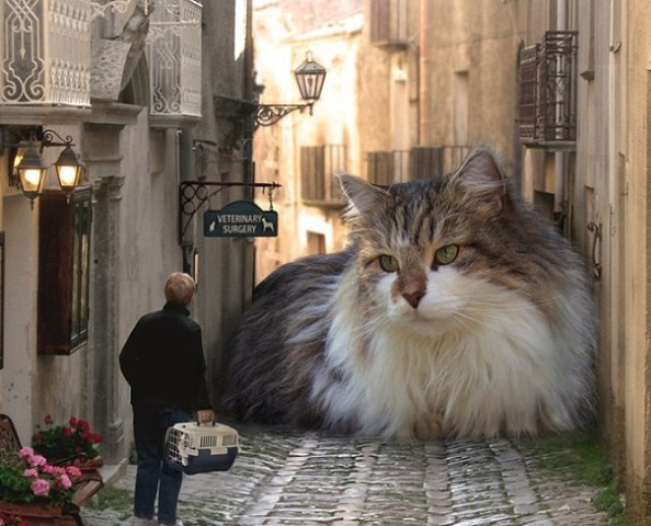 В компании с Евой * Просмотр темы - Кошки фотографируются.