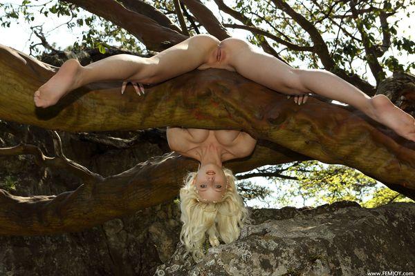 фото голое дерево