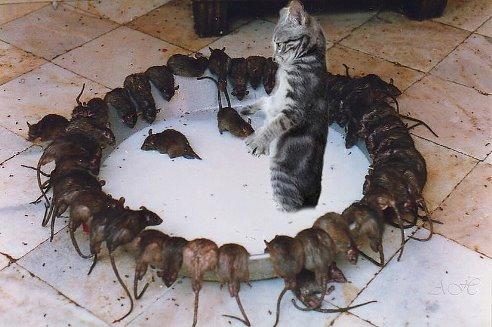 совсем мышей не ловишь