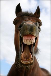 злоебучий конь