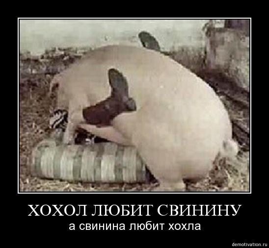 украина хохлы порно