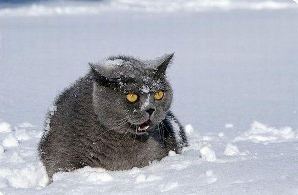 Ответыmailru помогите найти фильм 2 дурня в снегу