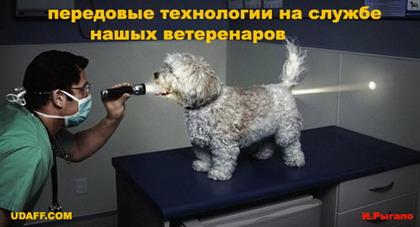 http://udaff.com/image/472/47222.jpg