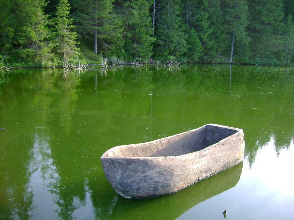 лодка долбленка какие деревья