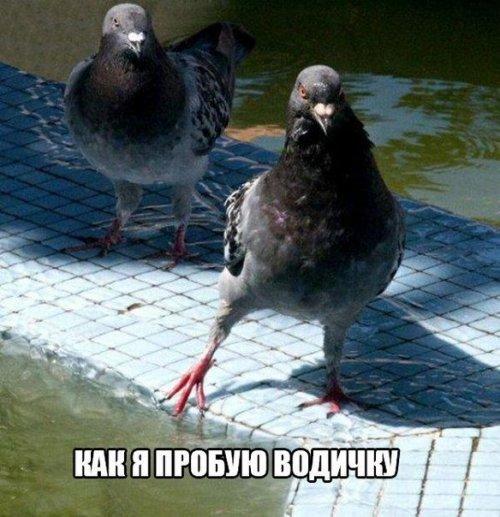 eblya-zebr-kak-eto-uniseks-video-chastnoe-lyubitelskoe-russkoe-porno-v-bane