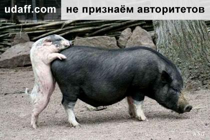 http://udaff.com/image/614/61450.jpg