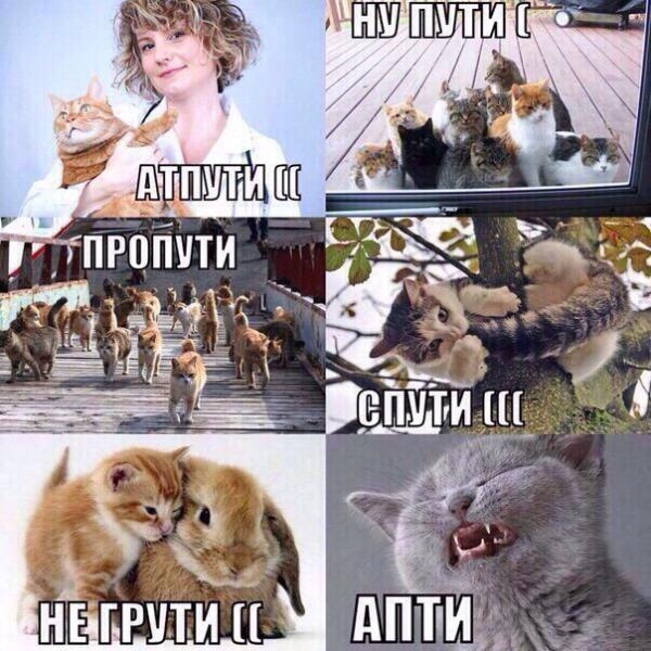 пути не путю картинка с котиком